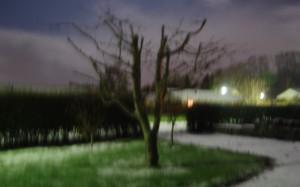 Kirsebærtræ i mørke uden blitz